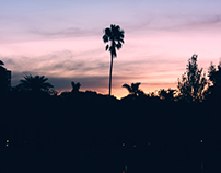 Palm - trees