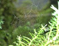 Tela de araña..