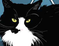 Black Night Cat