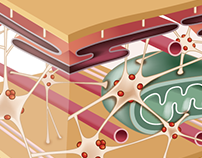 Ilustraciones - Biología