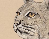 Ilustración científica - Lynx