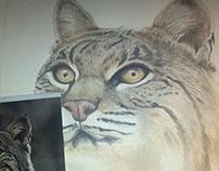 Gato Montes llustration