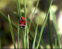 LadyBug - Digital Photography