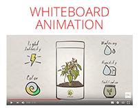 Chillio Whiteboard Animation Video