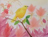 Watercolors 2015