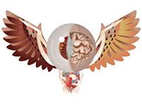 Disección de logotipo