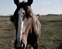 Animales sin Hogar / Uruguay