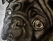 ILUSTRACIÓN DE PUG / PUG ILLUSTRATION