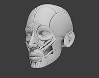 Muscular system_Head
