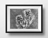 Ilustracion - Planta Larix