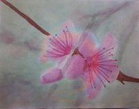 Sakura Acuarela