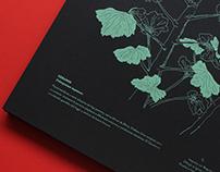 Geranium: Pelargonium Inquinans