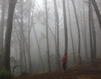Bosque de pinos, Santa Elena, Medellín, Colombia.