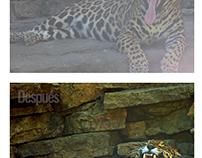 Retoque digital a fotografías de animales