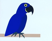Blue Macaw Project