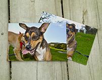 Muestra fotográfica de mascotas