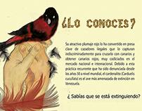ConservacionCardenal