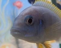 Dentro do aquário