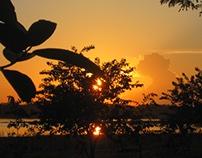 Paisajes Amazónicos
